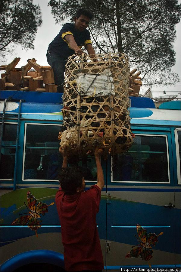 Тяжелые и объемные грузы принято перевозить на крыше автобуса.