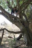 Ожидание на дереве, надо затаится минут на тридцать и зверушки придут сами