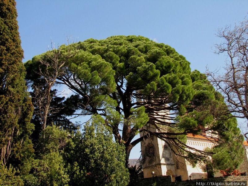 Красивое дерево во дворе Монастыря Савина.