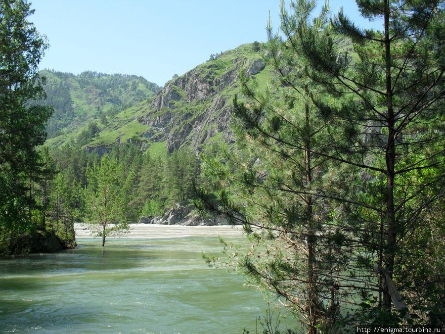 Зелёные воды Чемала сливаются с мутными во время паводка водами Катуни.