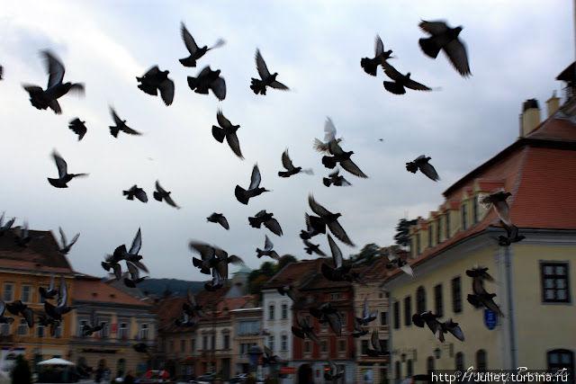 голуби на Ратушной площади Брашов, Румыния