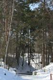 Лес еще спит под снежным покрывалом