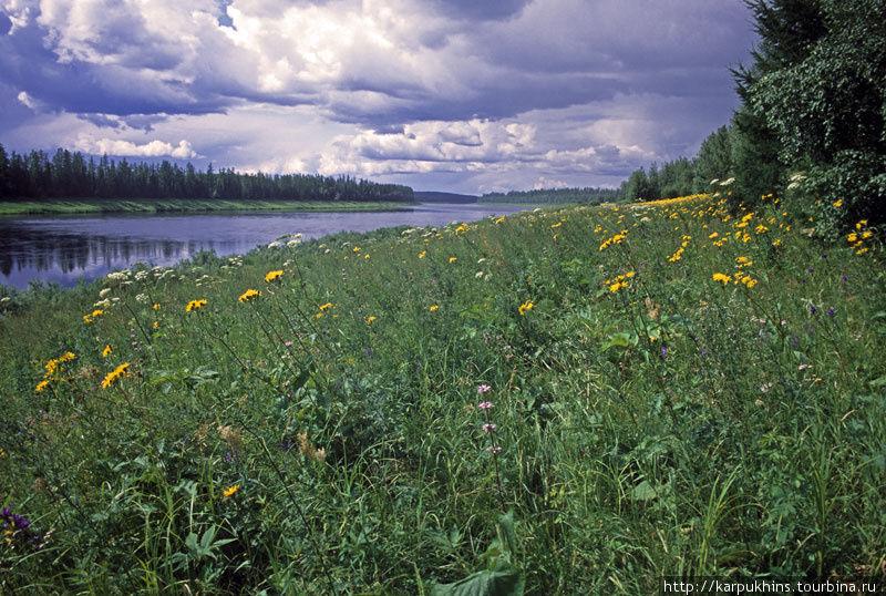 Иногда берега здесь просто настоящие цветочные поляны.