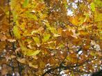 Золотая осень, однако...