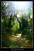 По пути к водопаду Dray Sap