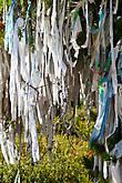 Ритуальные ленты на деревьях на Улаганском перевале