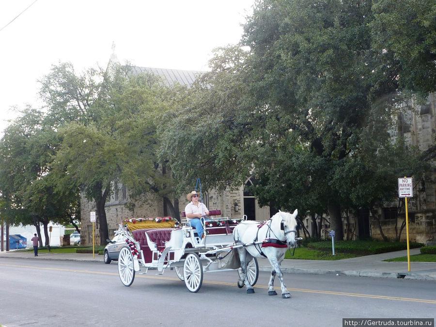 Лошадка  с каретой для экскурсий