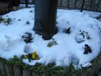 Цветы и снег.