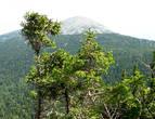 Гора Круглица, как девичья грудь, очень правильной красивой формы