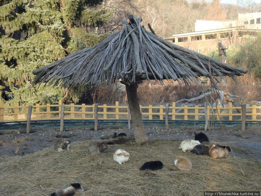 В зоопарке.