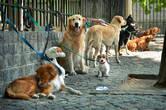 И по традиции, не могу не сказать пару слов и про пушистых обитателей Буэнос Айреса, которые заслуживают ничуть не меньшего внимания! Например, портеньос настолько любят своих собак, что ну никуда не могут без них выйти — ни на прогулку, ни в автобус, ни по магазинам! Именно в честь такого случая тут была изобретена удивительная система собако-хранительниц-выгуливательниц! Пока хозяева ходят по магазинам в поисках чего-нибудь очередного ненужного — их мохнатые друзья находят свою тусовку и ждут своей очереди на погулять…