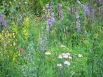 Степь. Разнообразие цветов и трав.