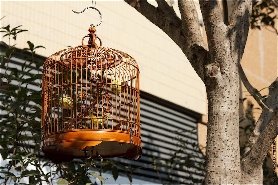 Цветочный рынок плавно переходит в Птичий рынок. От наших птичьих рынков он отличается тем, что тут продают именно птиц, причем очень недешевых, а у нас всех — от мышат до крокодилов