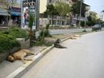 Это, между прочим, — ценральная улица — бульвар Ататюрка.