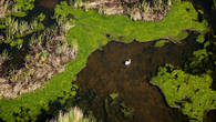 Лебедь-шипун у гнезда. Вертолетная съемка. Дельта Урала