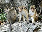 Вездесущие обезьянки — нынешние постоянные обитатели  легендарной скалы