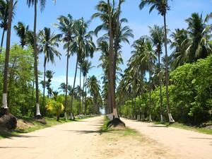 500 метров тропы на Райский пляж были для меня испытанием выносливости — тучи комаров и я единственная их пища.