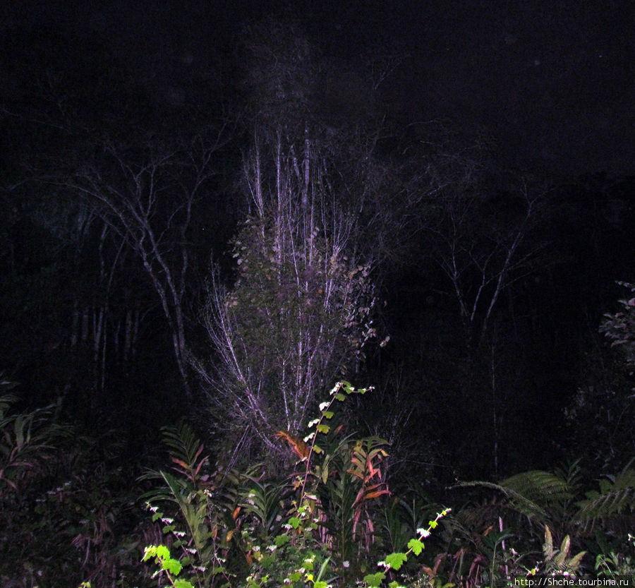 на этом дереве, типа, было видно ночного лемура