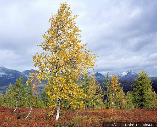 Водораздел между долинами рек Манья и Парнук, под горой Городкова. Вид на долину Парнука. Осень в Приполярный Урал приходит стремительно. Так быстро, что растительность не успевает реагировать одновременно. Первыми желтеют берёзы, затем лиственницы, одни быстрее, другие запаздывают. К тому времени всё уже покрывает красный ковёр из карликовой берёзки, а вершины гор припорошил снег.