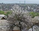 Абрикосы цветут повсеместно, особенно хорошо в населенных пунктах. Но как-то смущает задний фон.