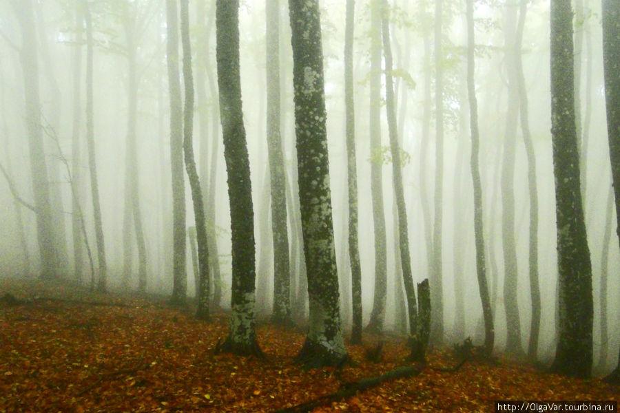 Что-то мистическое есть в таком лесу, накрытом туманом