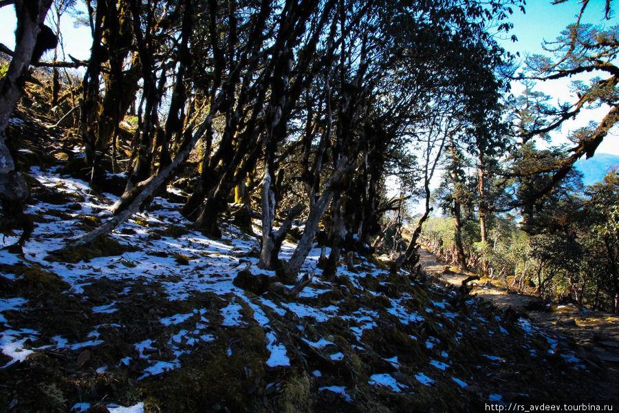 Первый снежок на нашем пути, высота примерно 3500м.