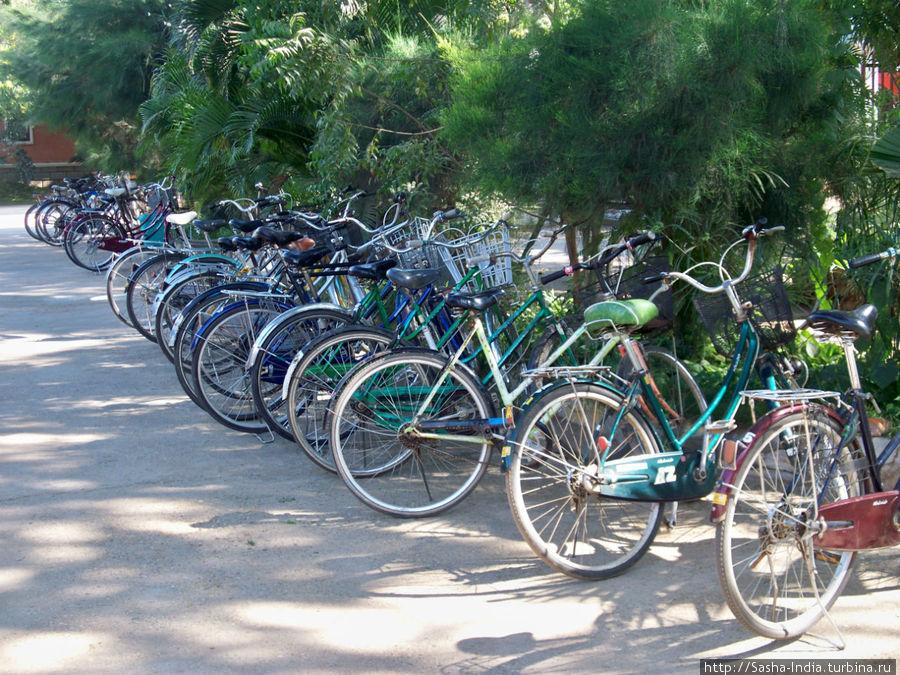 Все желающие могут взять напрокат велосипеды.