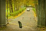 Пёс у входа в парк Монрепо.