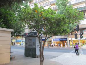 Апельсиновые деревья на улице