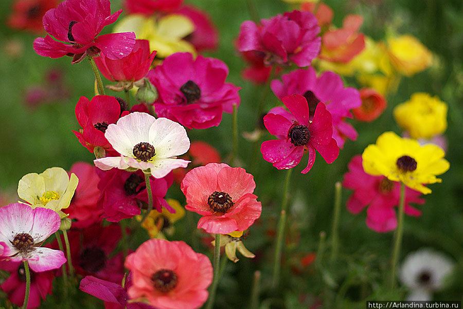 Фантастические краски иранской весны Иран