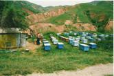 Мимо проходим жилища пасечников, которые приезжают в горы дышать воздухом и производить мёд на целое лето