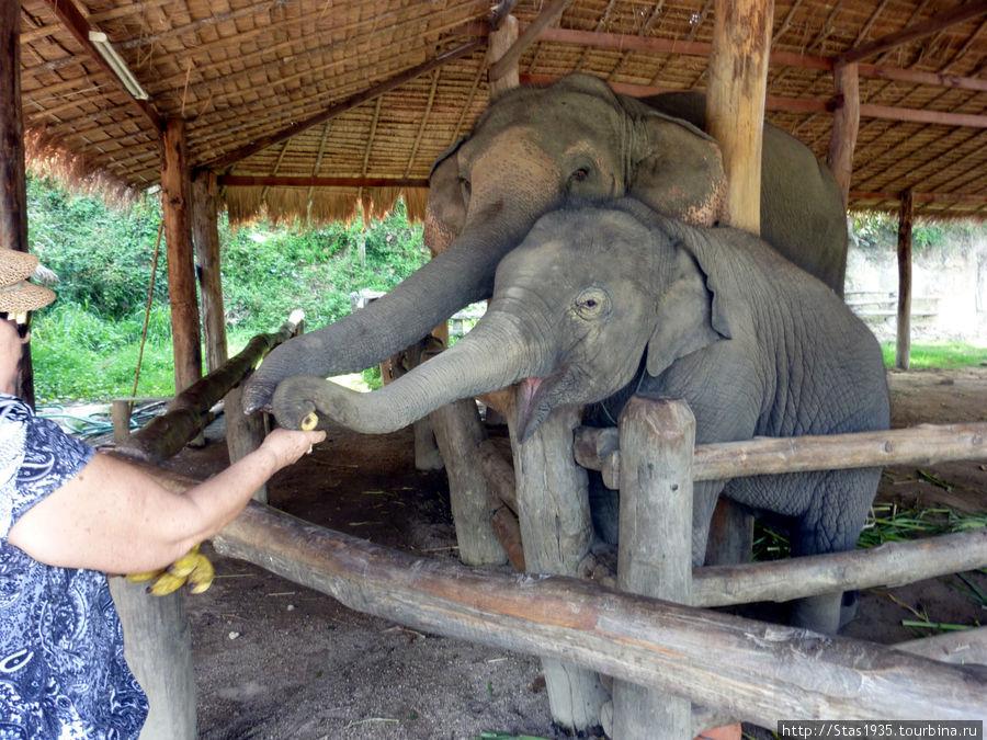 Лампанг. Деревня слонов.