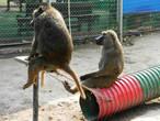 В зоопарке, совсем небольшом порадуются маленькие дети — им разрешается брать в руки цыплят, черепах и кроликов