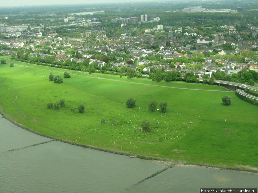 Овечки на другом берегу Рейна кажутся совсем крошечными