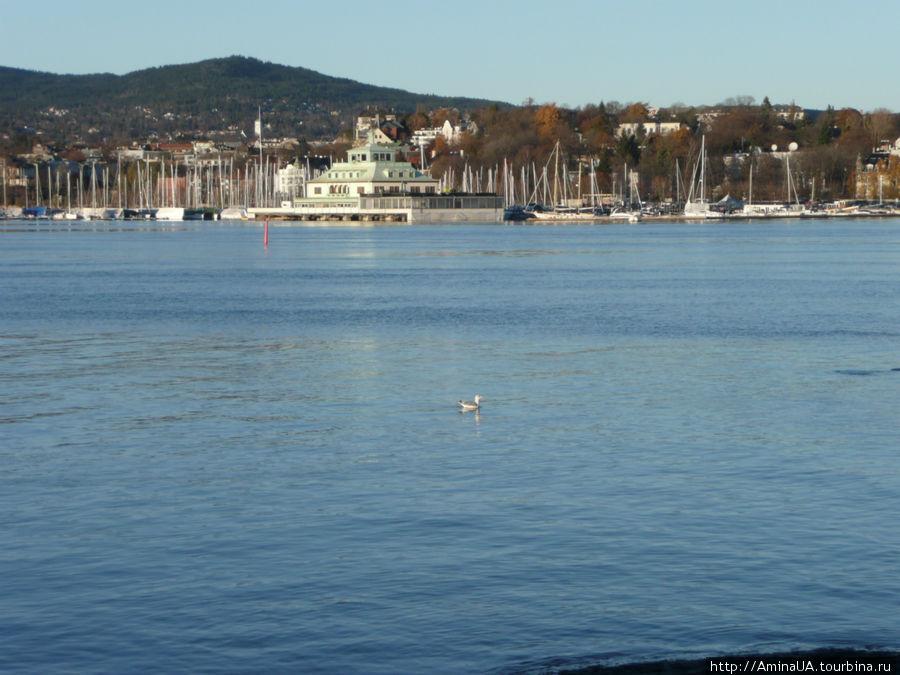 марина в Осло