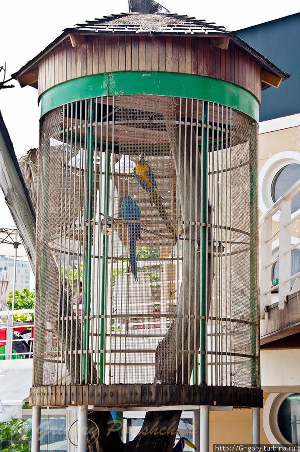 Семейная жизнь попугаев- единственный источник шума...)))