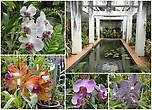 Особая забота и гордость ланкийцев – Дом орхидей. Каких только расцветок здесь нет — целая радуга