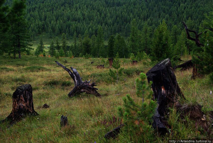 Сакральные места Алтая. Улаганский перевал Усть-Улаган, Россия