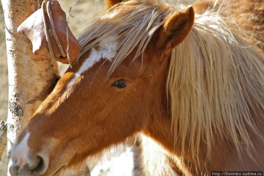 Железо, лошади и сверхпроводимость Ллортс, Андорра