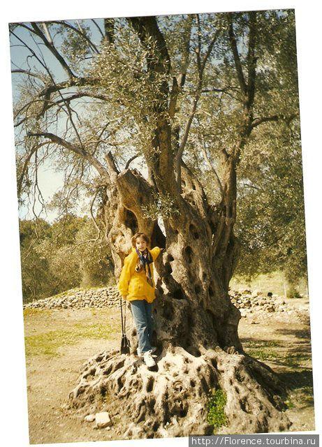 Дочка в Гортисе, у оливкового дерева. Одета
