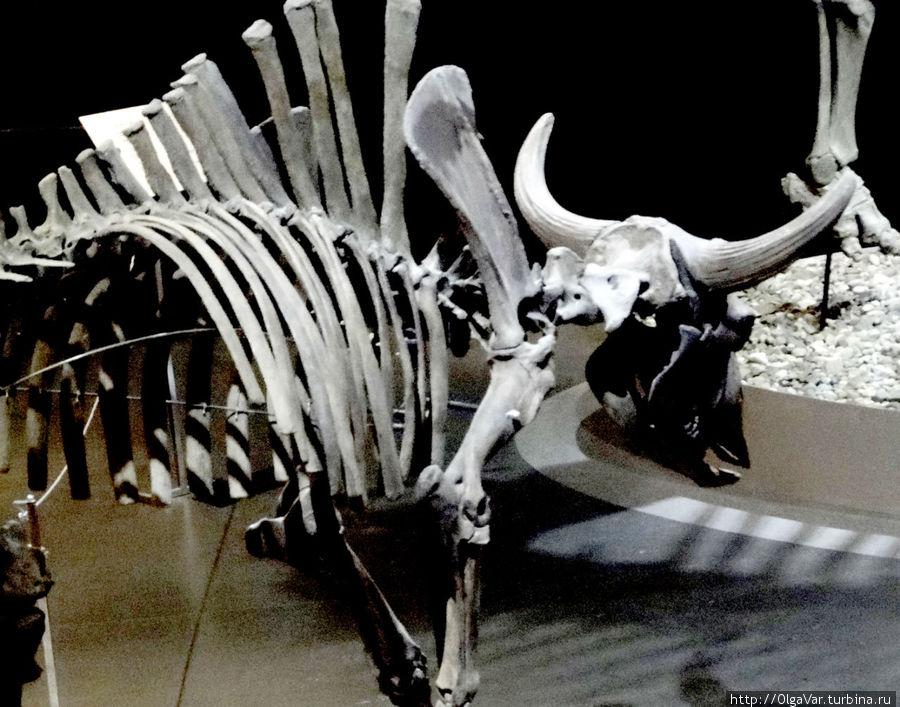 Пермский период является переломным в истории Земли. С ним закончилась Палеозойская эра, и в его конце произошло вымирание, которое многие палеонтологи считают величайшей катастрофой, даже большей по масштабу, чем последующая, что привела к гибели динозавров