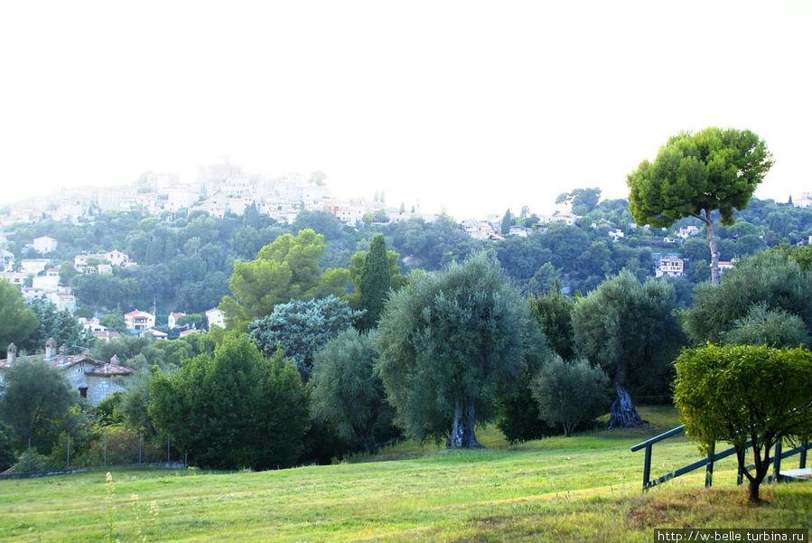 Оливковый сад в усадьбе