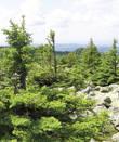 В своем движении курумы могут срезать почвенный покров и уничтожить растительность. Лишь небольшой участок на горе покрыт молодым леском. Большими здесь деревья не вырастают