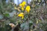 Суровый вид парка оживляется желтыми соцветиями дрока: в зимнее время они видны издалека.