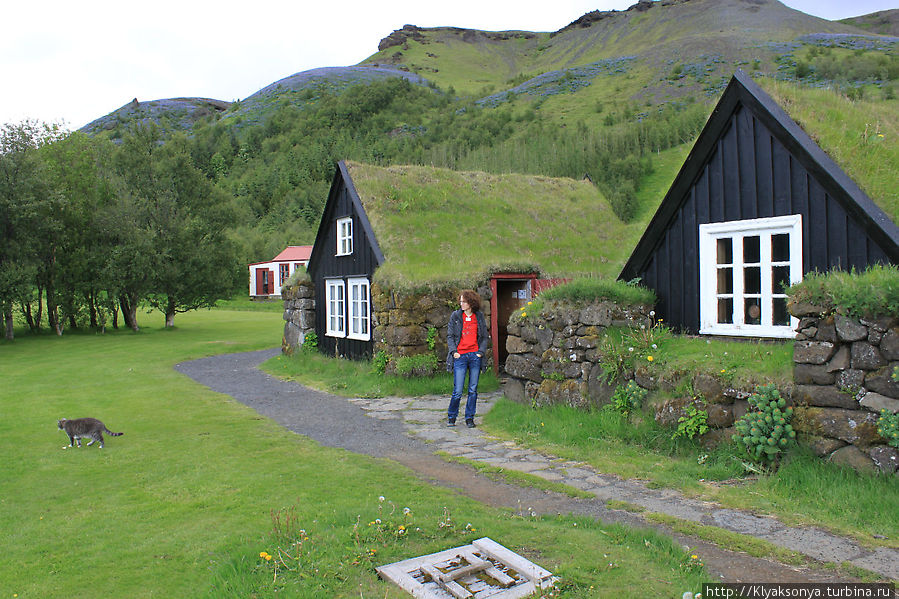 Исландские коты не такие ласковые как русские