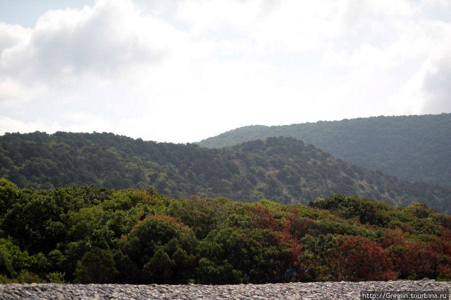 10 утра — очень жарко и влажно — в лесу практически невозможно дышать