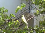 а это наш любимый попугай (здесь у него слегка подрезаны крылья, поэтому он не мог улететь)