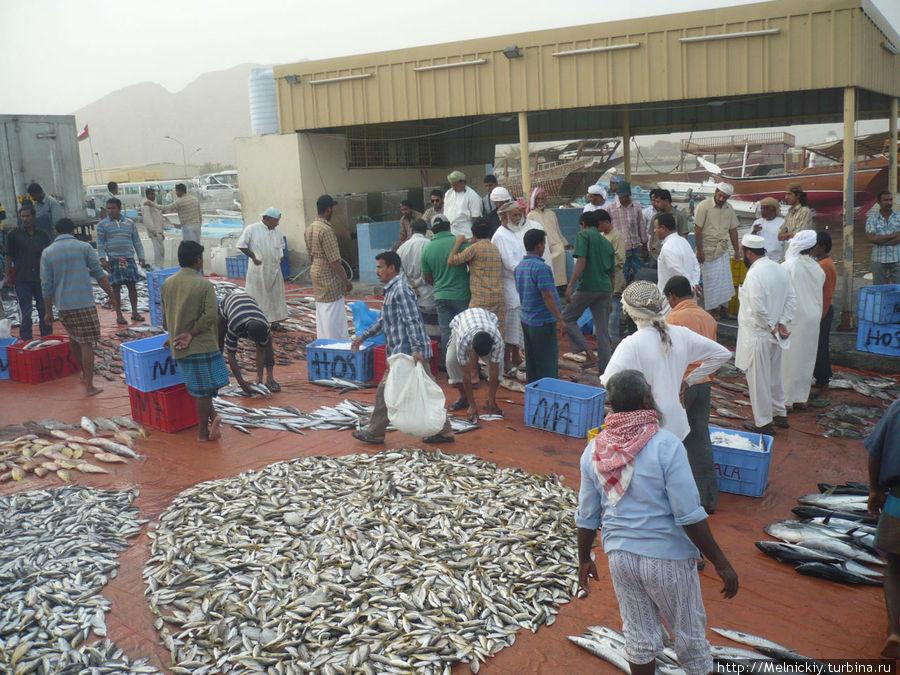 Рыбный рынок в порту Аль-Мина Регион Мусандам, Оман