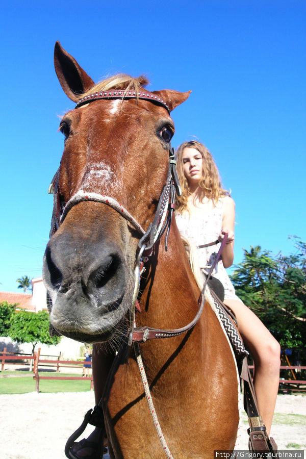 Конь должен иметь вид лихой и придурковатый дабы разумением своим не смущать седока.  (Плагиат конечно))))