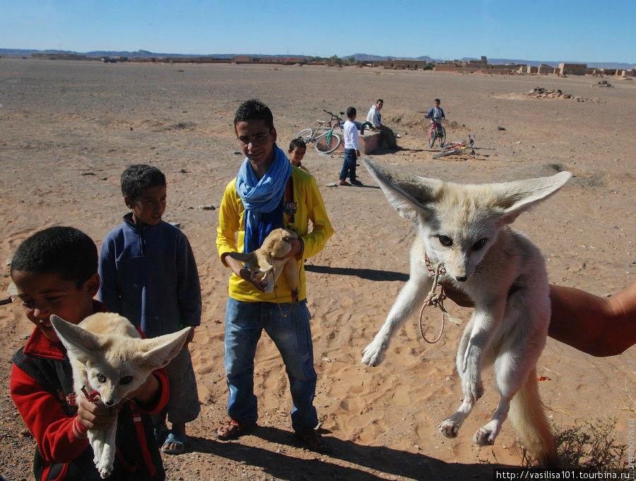 Пустынная лисичка, дети п